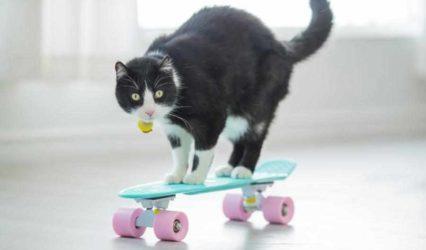 Para cuando el cascabel al gato - Editorial Transportealdia